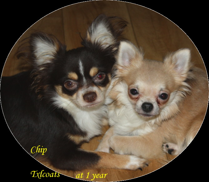 CHIP AND PENNY AT 1 YEAR FOR CHIP